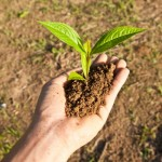 Seedling In Hand by zirconicusso, www.freedigitalphotos.net